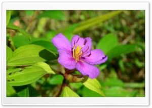 Kadali Nikon D5100 Sample Photo