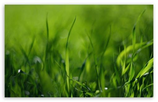 Download Green Gras UltraHD Wallpaper