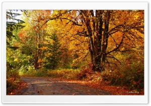 Walk into Fall