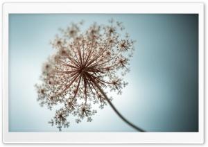 Tiny White Flowers Plant Macro