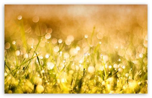 Download Grass Bokeh UltraHD Wallpaper