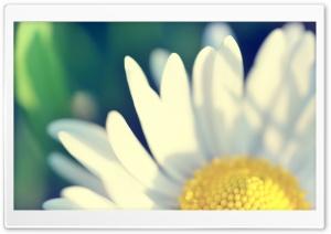 Yellow Flower HD