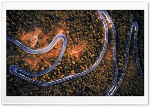 Winding Road, Forest, Spain