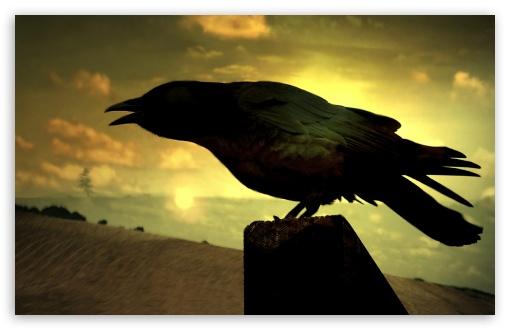 Download Raven UltraHD Wallpaper