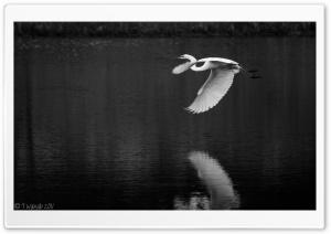 Crane Bird Flying Black and...