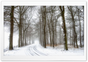 Snowy Road and Trees, Winter