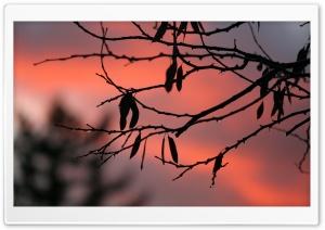 Tree Twigs, Twilight