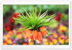 Amazing Flower Bokeh