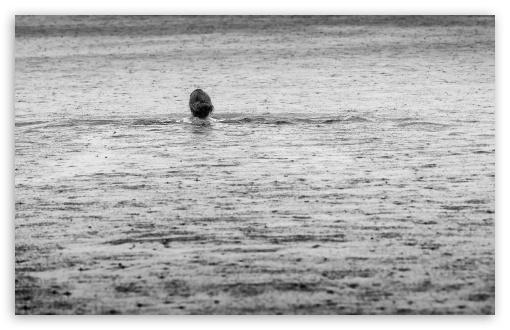 Download Swimming in the Rain UltraHD Wallpaper