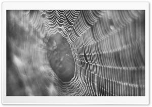 Dew On Spider Web Macro