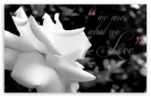 Download We are what We Love _ Monochrome Soft UltraHD Wallpaper