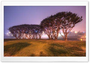 Trees In San Diego