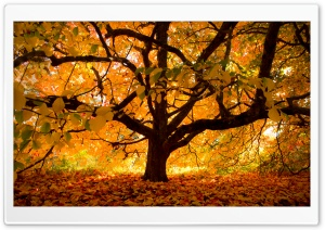 Autumn Colours under the Tree