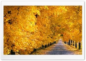 Fall Tree Pathway