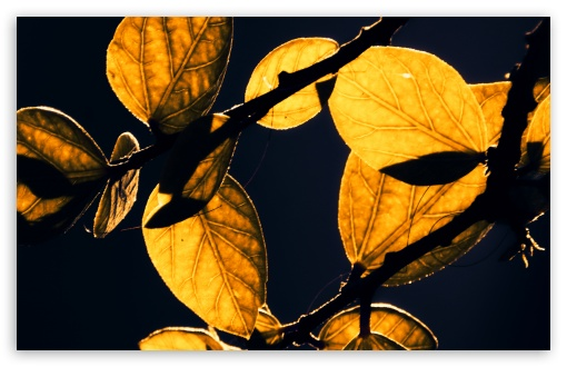 Download Autumn Leaves UltraHD Wallpaper