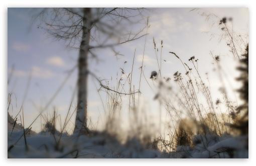 Download Winter Blur UltraHD Wallpaper