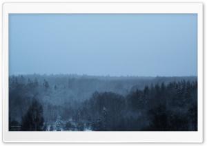 Winter in the woods ART.IRBIS...