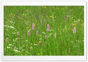 Green Pasture Summer 1