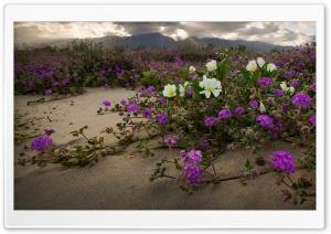 Anza Borrego Desert State...