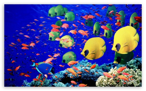 Download Life Below The Red Sea Egypt UltraHD Wallpaper