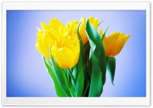 Spring Flowers Bouquet