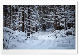 Forest Trail In The Snow