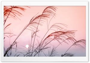 Grass, Sunset