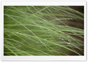 Grass Threads