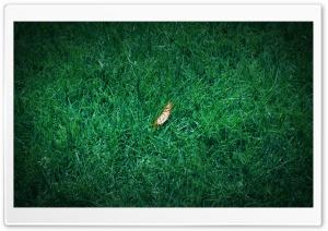 One Fall Leaf