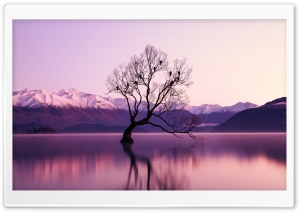 Birds, Tree, Lake, Water