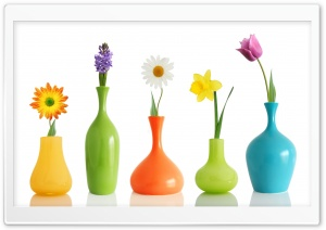 Colorul Flower Vases