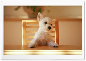 Dog Sitting On A Chair At The...