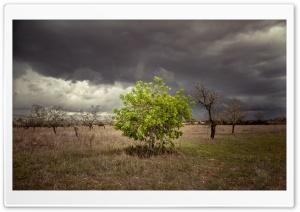 A Single Green Tree...