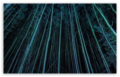 Download TighTrees UltraHD Wallpaper