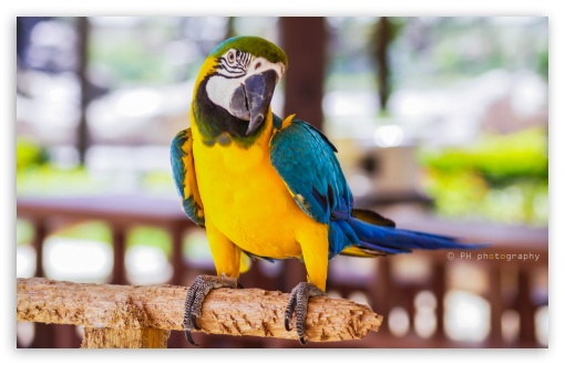 Download Parrot UltraHD Wallpaper