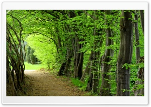 Forest Path, Summer