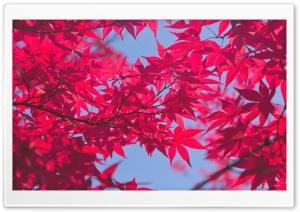 A Pink Autumn