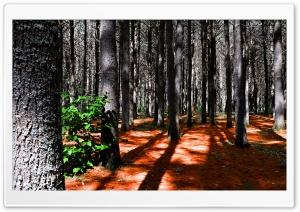 Deep pine forest - Fort de pins