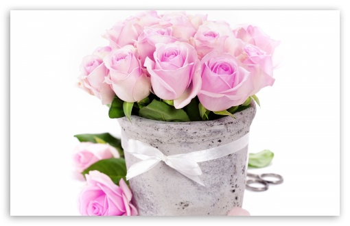 Download Light Pink Roses UltraHD Wallpaper