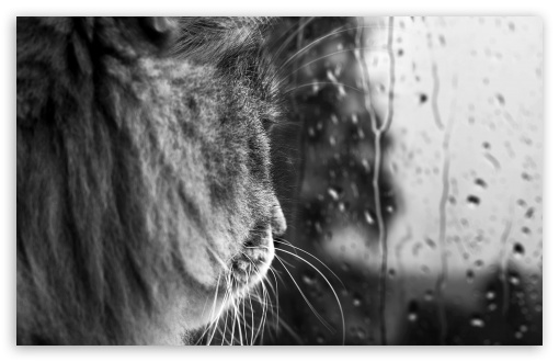 Download Rainy Day BW UltraHD Wallpaper