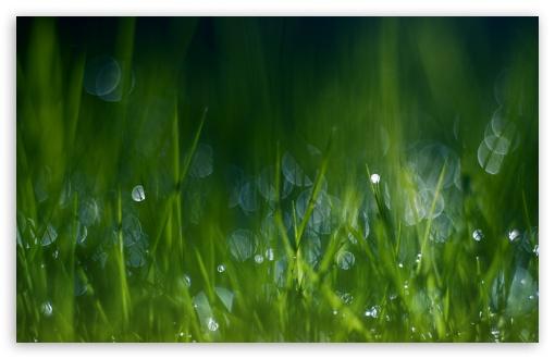 Download Summer Grass, Bokeh UltraHD Wallpaper