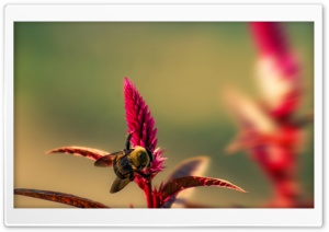 Bumble Bee Insect