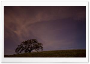 Live Oak At Twilight