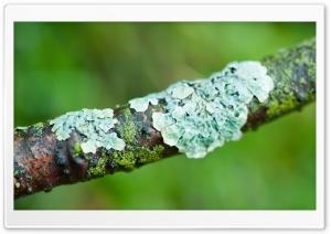 Lichens Macro