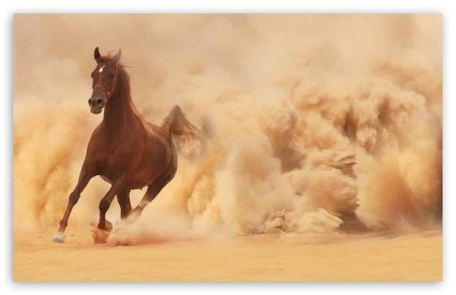 Download Horse UltraHD Wallpaper