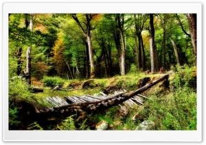 Forest Wooden Bridge