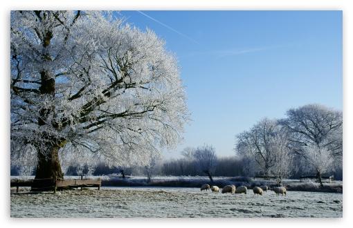 Download Beautiful Winter Landscape Along The Kromme... UltraHD Wallpaper