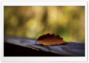 Brown Leaf Mcaro