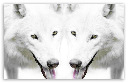 Download Wolf UltraHD Wallpaper
