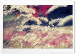 Close-up Of Wild Grass